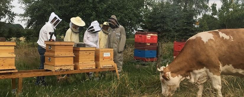 Glückliche Bienen